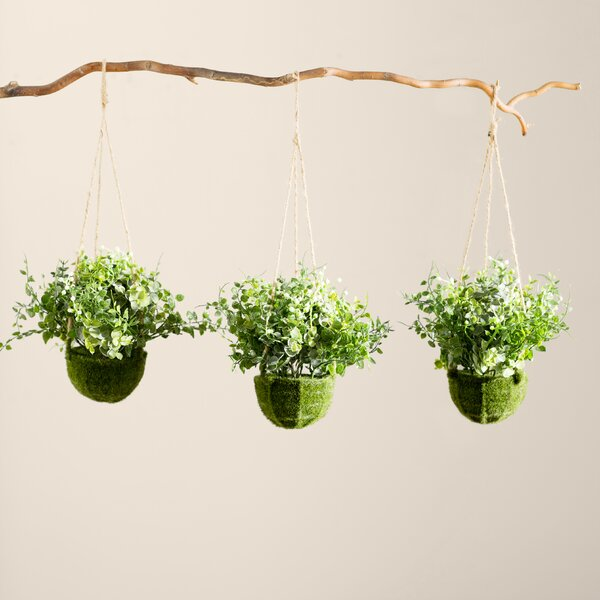 Eucalyptus, Maidenhair and Berry Hanging Plant in Basket (Set of 3) by Mercury Row