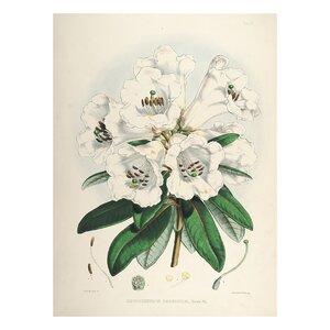 Vintage Botanical 'II' by Julia Kearney Graphic Art Print by Evive Designs