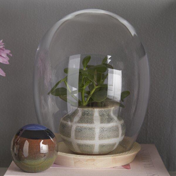 Cofield Glass Cloche by Wrought Studio