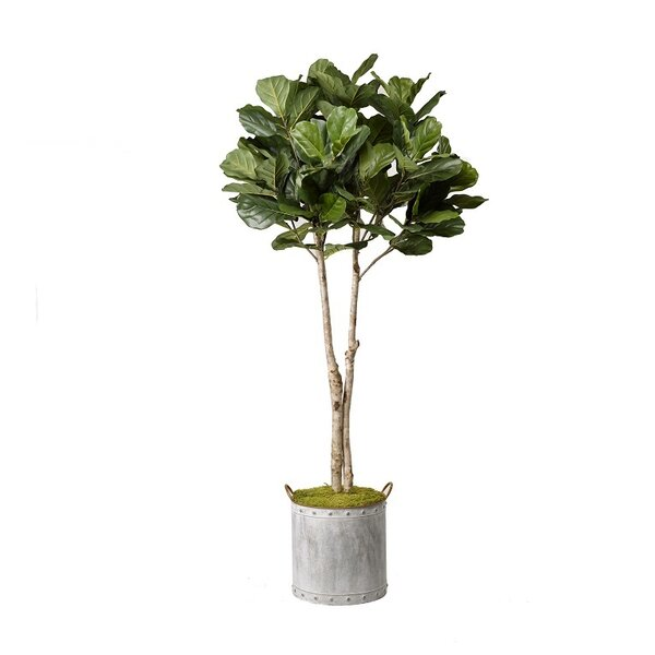 Fiddle Leaf Fig Tree Foliage Plant in Planter by August Grove