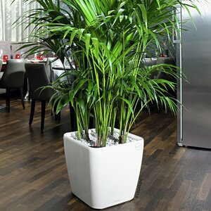 Modern Indoor Planters | AllModern