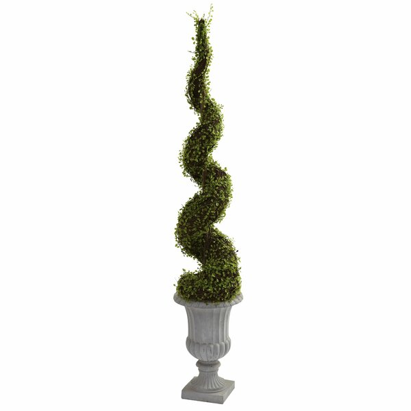 Mohlenbechia Spiral Round Topiary in Urn by One Allium Way