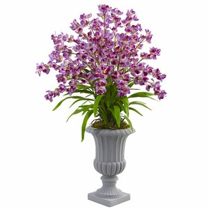 Copeland Giant Blooming Orchid Arrangement in Urn