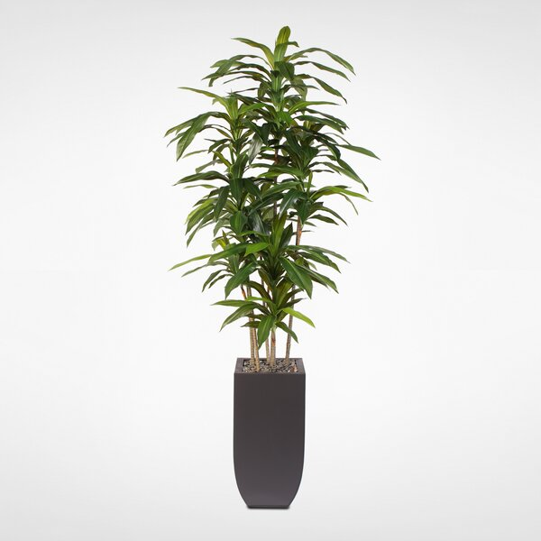 Artificial Floor Dracaena Massangeana Tree in Planter by Latitude Run