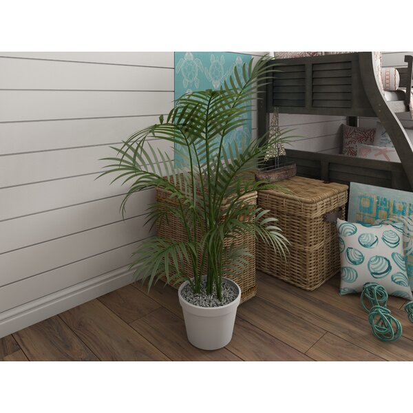 Kentia Palm Tree in Pot by Beachcrest Home