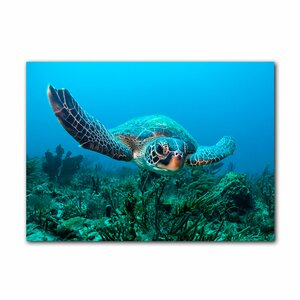 Turtle by Christopher Doherty Photographic Print on Canvas by Ready2hangart