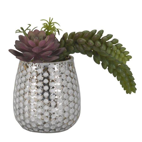 Desktop Succulent Plant in Glass Vase by Brayden Studio