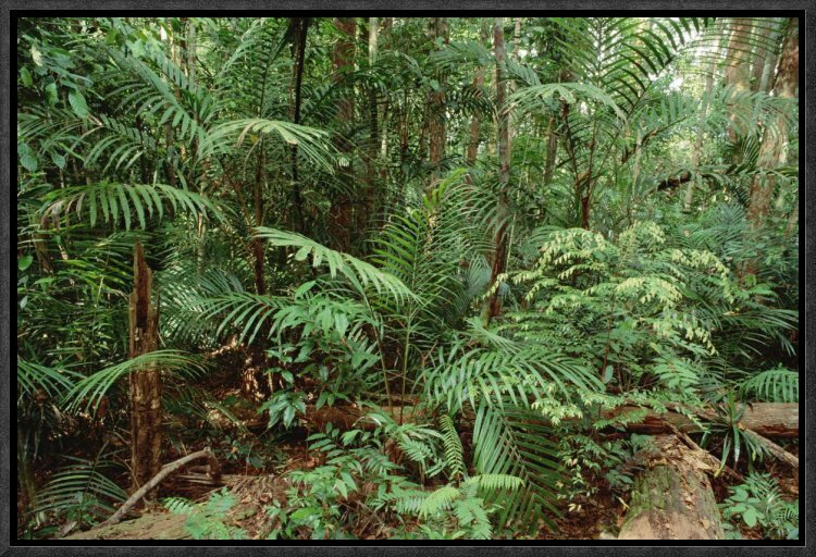 Rainforest Green Jungle awesome Canvas wall home Decor quality choose your size