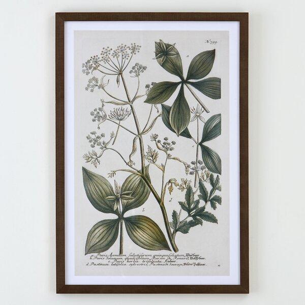 Classic Botanical Framed Print by Birch Lane™