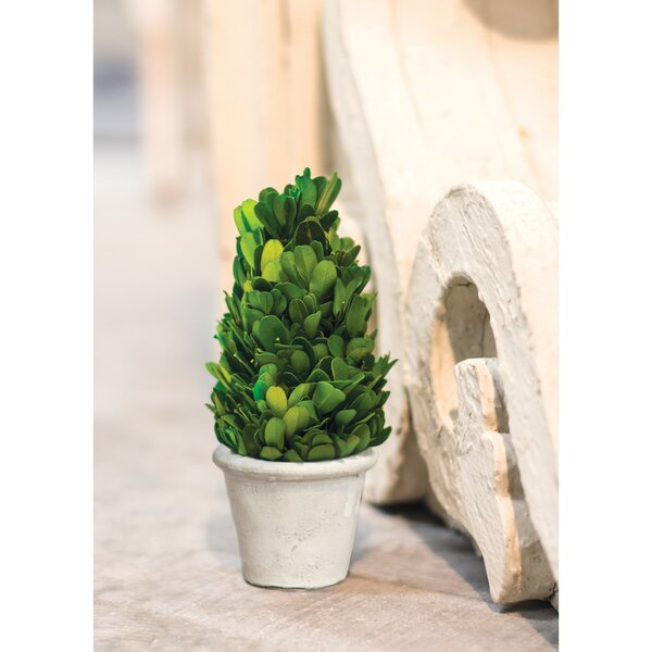 Cone Desktop Boxwood Topiary in Pot by Charlton Home