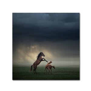 'Horses Fight' Photographic Print on Wrapped Canvas by Trademark Fine Art
