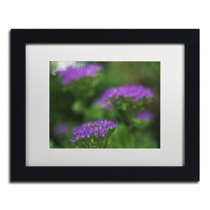 Purple Seedum by Kurt Shaffer Framed Photographic Print by Trademark Fine Art