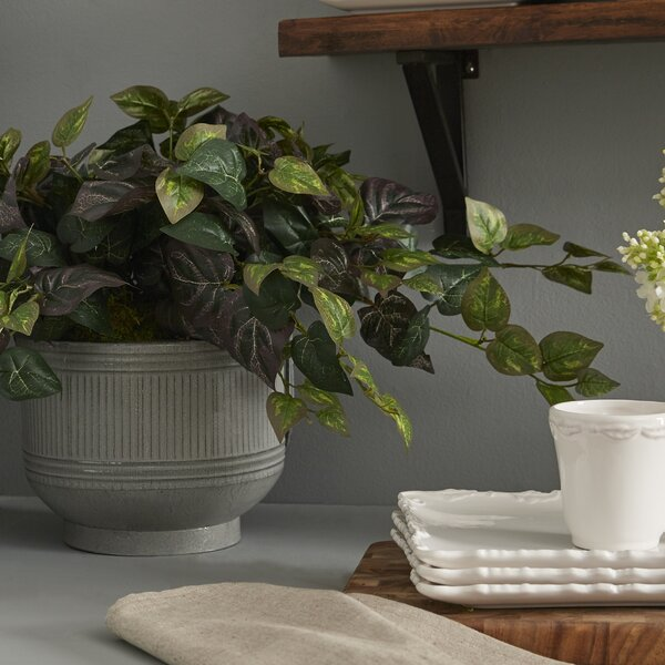 Oxalis Ivy Desk Top Plant in Planter by Charlton Home