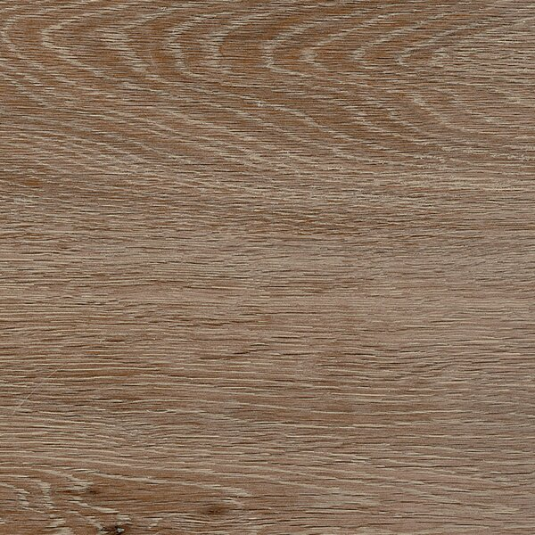 Vogue 8 x 48 Porcelain Field Tile in Brown by Madrid Ceramics