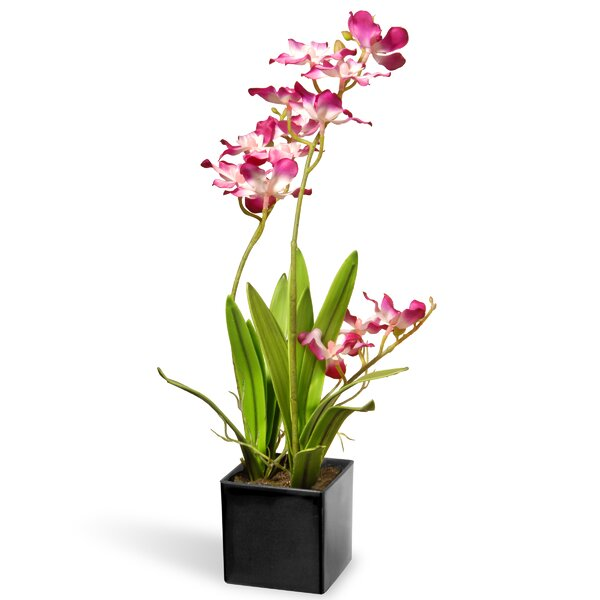 Orchid Flowers in Pot by National Tree Co.
