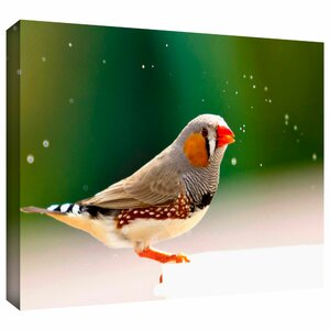 'Zebra Finch' by Lindsey Janich Photographic Print on Wrapped Canvas by ArtWall