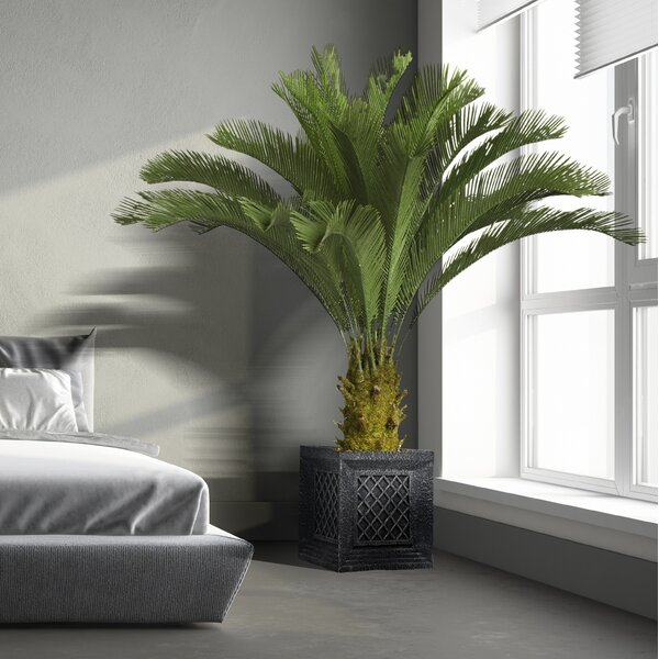 Floor Cycas Palm Tree in Planter by Bayou Breeze