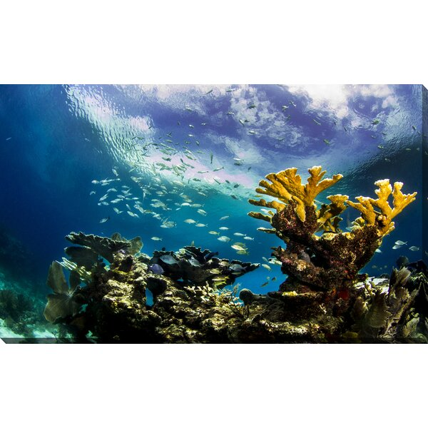 Keys Reef by Craig Dietrich Photographic Print on Wrapped Canvas by Picture Perfect International