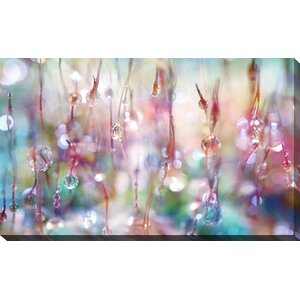 Rainbow Rain Catcher by Sharon Johnstone Photographic Print on Wrapped Canvas by Picture Perfect International