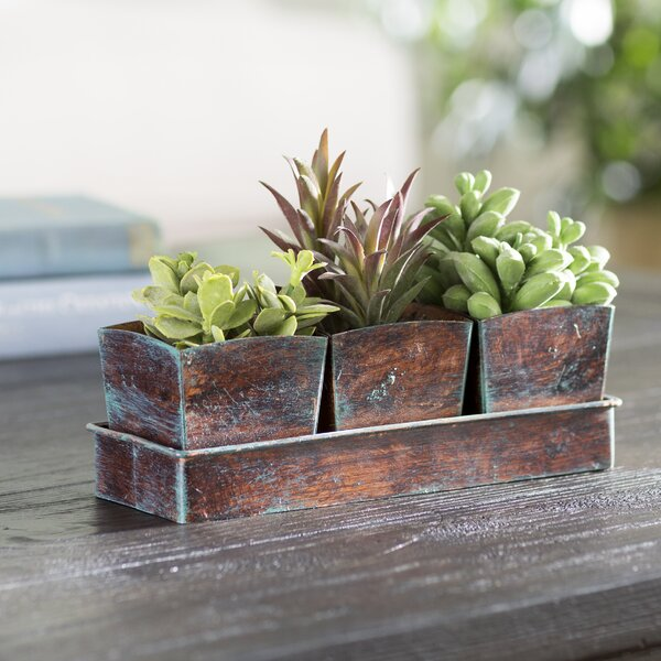 3 Piece Desktop Plant Long Tree Pot with Tray Set by The Holiday Aisle