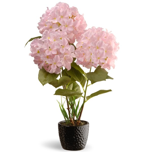 Hydrangea Flowers in Pot by National Tree Co.