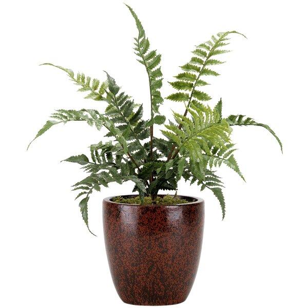 Leather Fern in Ceramic Floor Foliage Plant in Planter by Ebern Designs