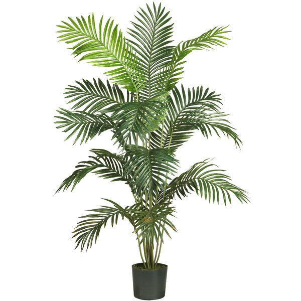 Black Hammock Floor Palm Tree in Pot by Beachcrest Home