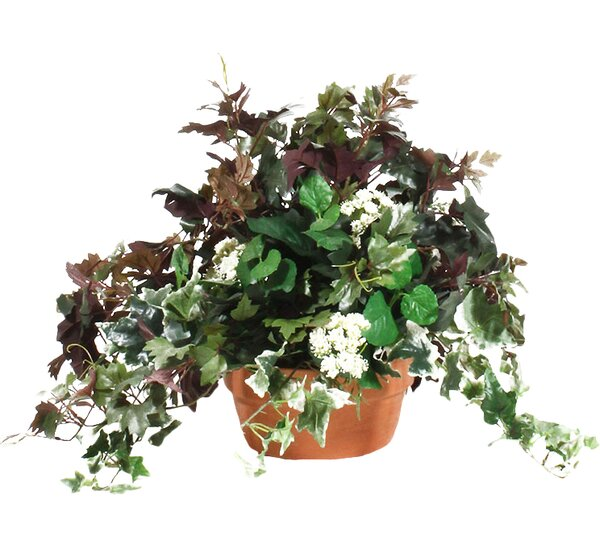 Mixed Ivy Table Top Plant in Terracotta Planter by Dalmarko Designs