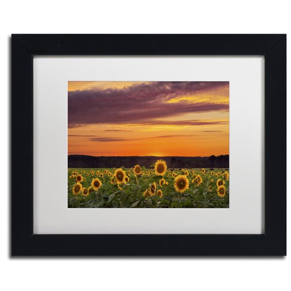 Sunflower Sunset by Michael Blanchette Framed Photographic Print by Trademark Fine Art