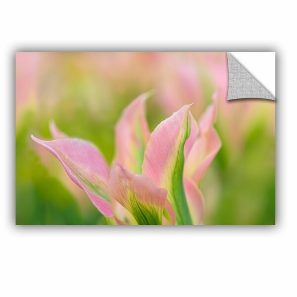 Viridiflora Tulip Removable Wall Decal by House of Hampton