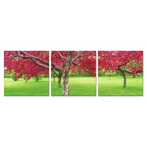 Cherry Blossoms 3 Piece Photographic Print Set by 3 Panel Photo