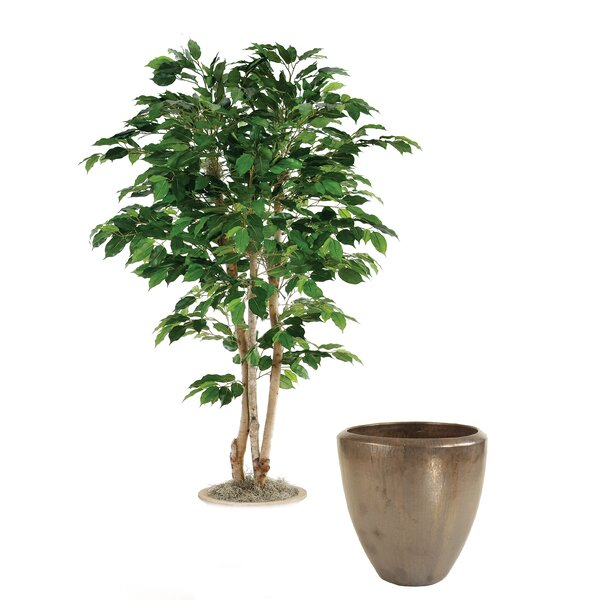 Green Ficus Tree in Stoneware Pot by Distinctive Designs