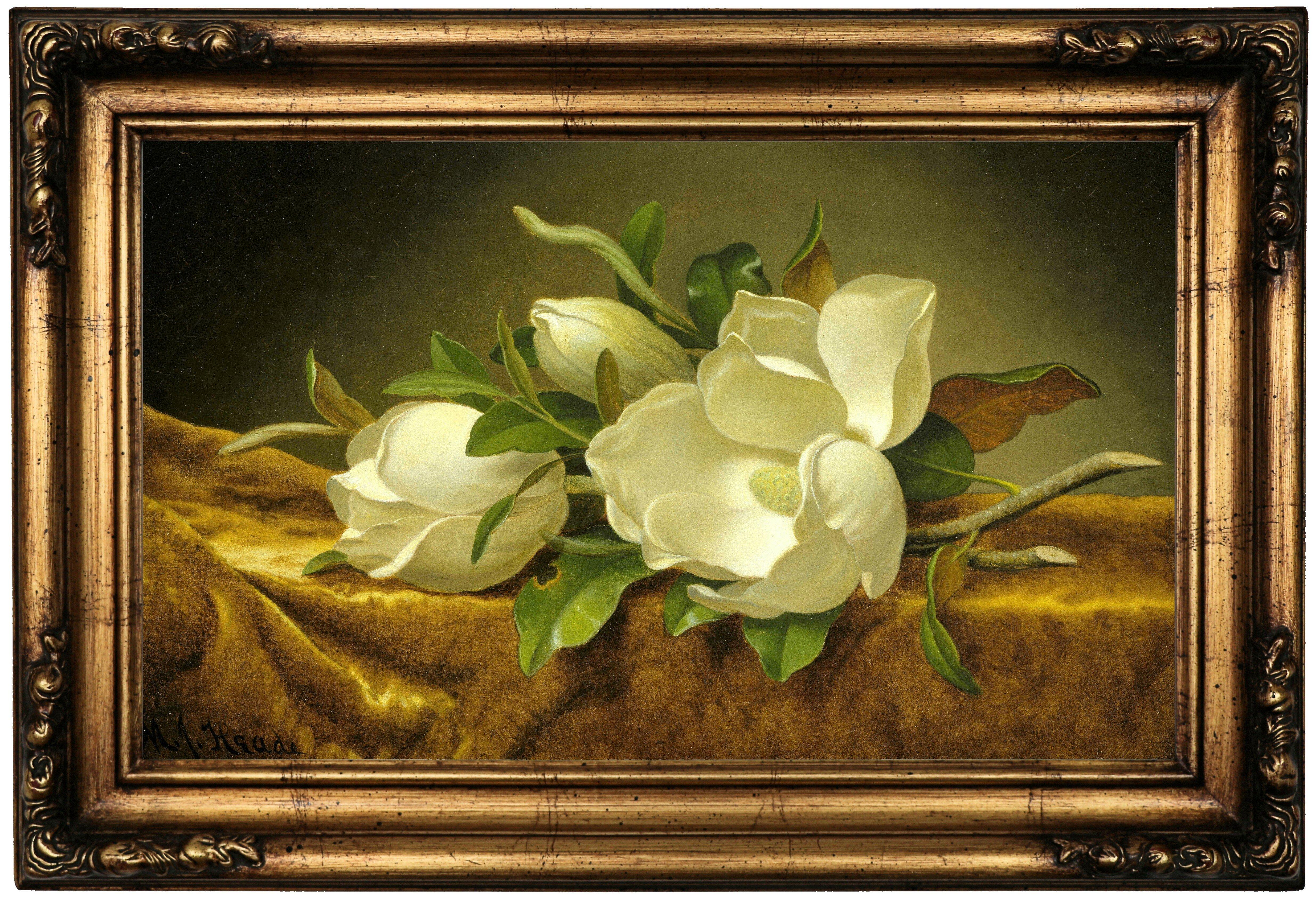Historic Art Gallery \'Magnolias on Gold Velvet Cloth\' Framed Print ...
