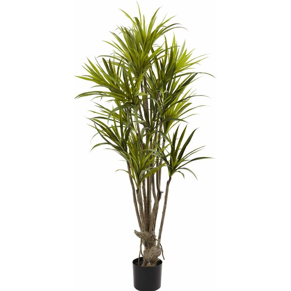 Dracaena Silk Tree in Pot by Nearly Natural