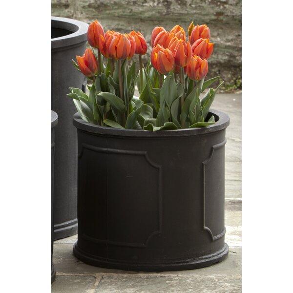 Criselda Plastic Pot Planter by Darby Home Co