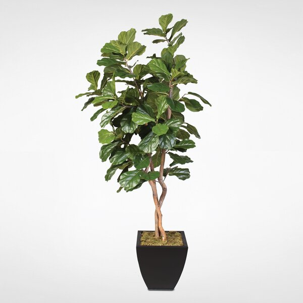 Fiddle Leaf Floor Ficus Tree in Metal Planter by Bungalow Rose
