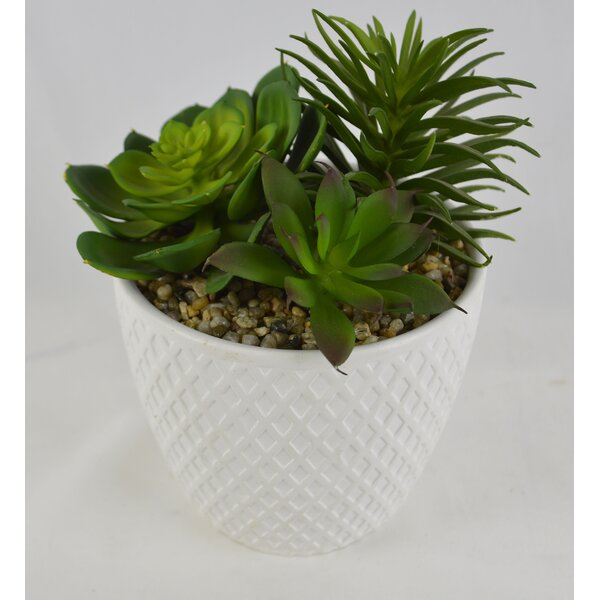 Desktop Artificial Succulent Plant in Pot (Set of