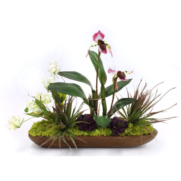 Orchid Flowering Plant in Planter by Bloomsbury Market