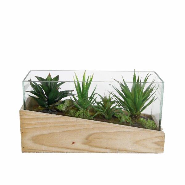 Desktop Succulent Plant in Planter by Wrought Studio
