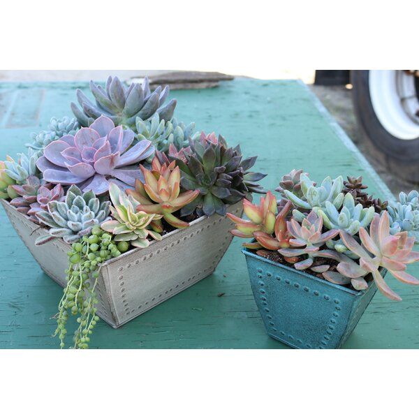 Marquis Pot Planter (Set of 3) by Robert Allen Home and Garden