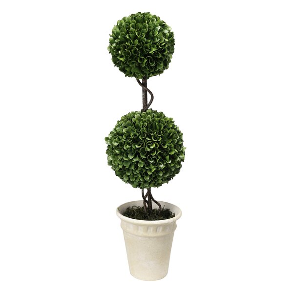 Floor Boxwood Double Ball Topiary in Pot by Alcott Hill