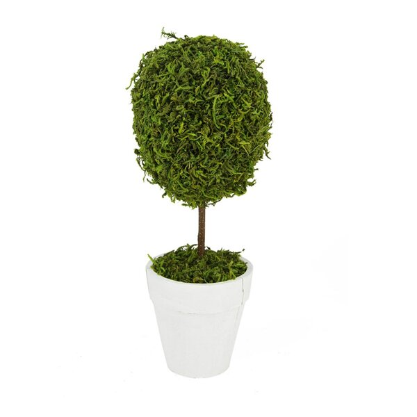 Reindeer Moss Ball Topiary in Pot by Northlight Seasonal