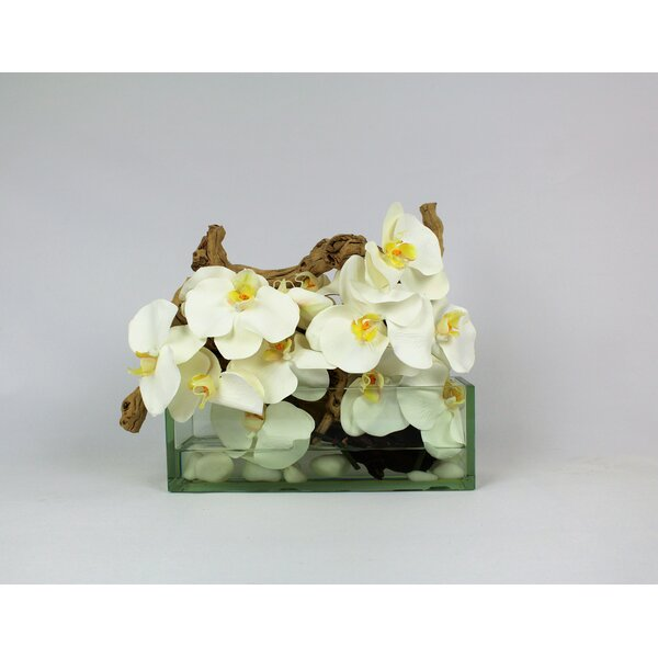 Phalaenopsis and Driftwood Orchids Floral Arrangement in Planter by Rosecliff Heights