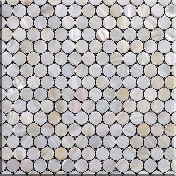 Authentic 1 x 1 Seashell Mosaic Tile in Natural by Matrix-Z