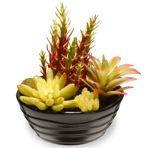 Succulent Desk Top Plant in Pot by National Tree Co.