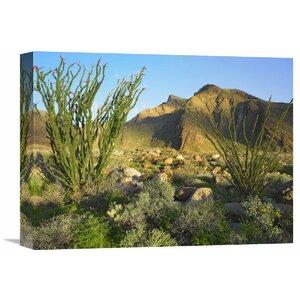 Nature Photographs Ocotillo Borrego Palm Canyon, Anza-Borrego Desert State Park, California Photographic Print on Wra... by Global Gallery