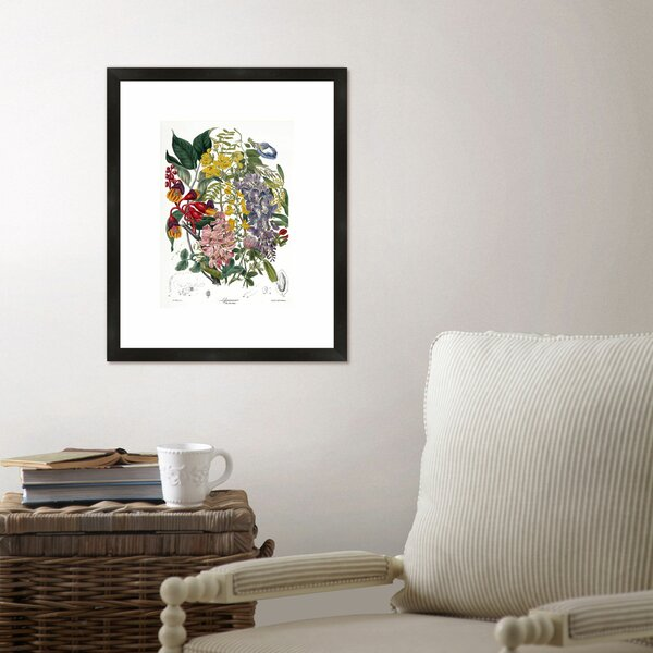 Botanical Framed Graphic Art Print by Birch Lane™