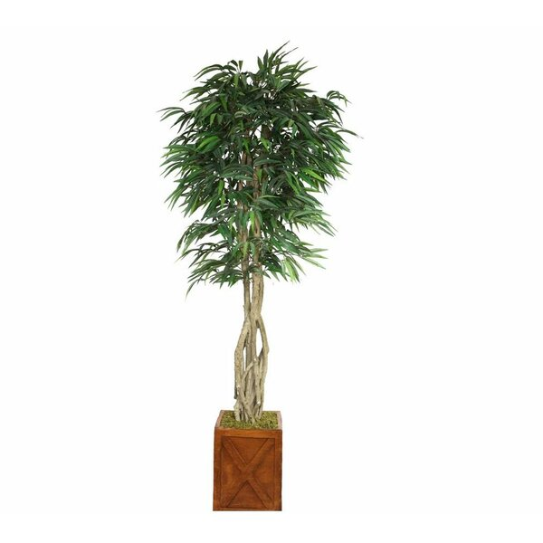 Tall Willow Ficus Tree in Planter by Bayou Breeze