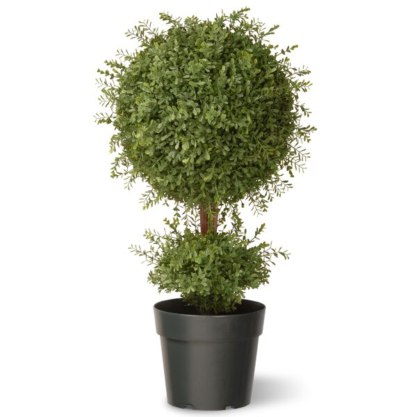 Tea Leaf Mini 1-Ball Topiary with Growers Pot by National Tree Co.
