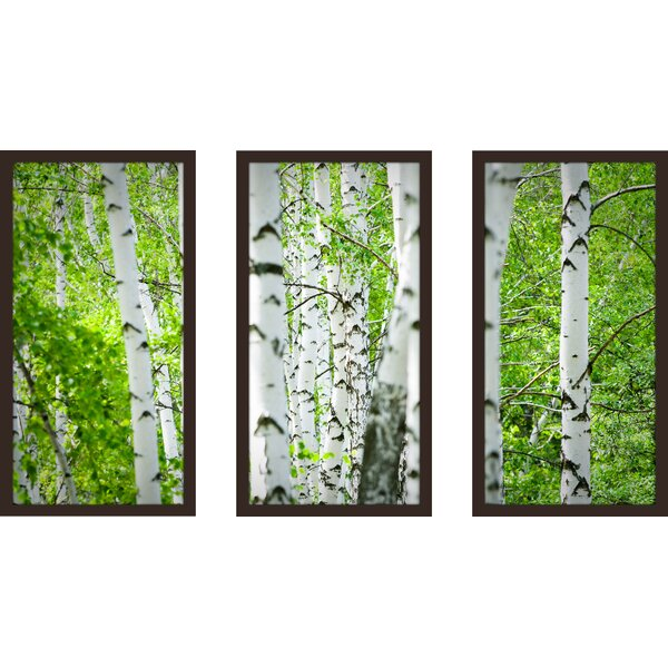 Birch Trees I 3 Piece Framed Photographic Print Set by Picture Perfect International